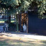 dog-facility-gates