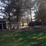 dog-outdoor-yard