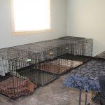 interior-kennel-crates