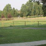 outdoor-dog-facility-yard
