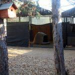outdoor-dog-igloo