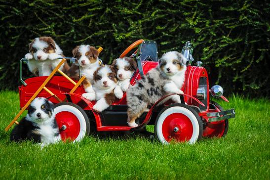 puppie-truck