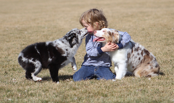kid-with-dogs-2