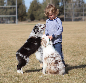 kid-with-two-aussies-small
